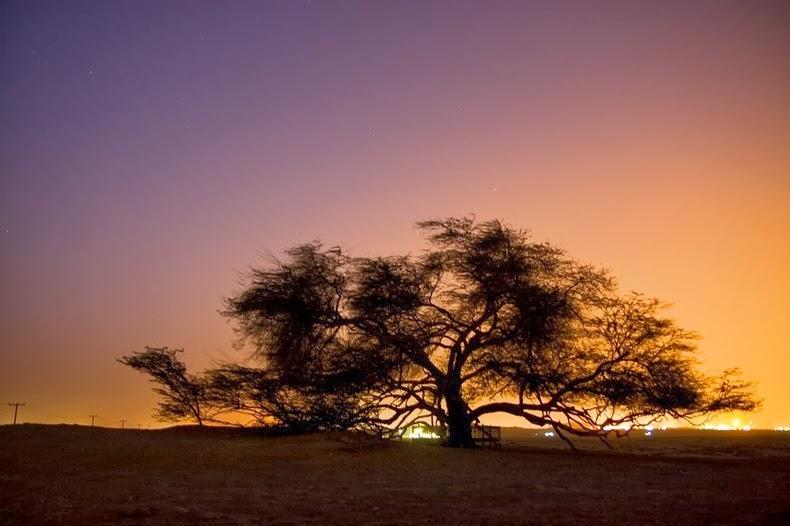 l albero della vita nel deserto del bahrain